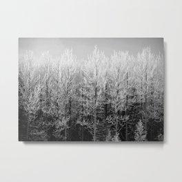 Frosty Trees Metal Print