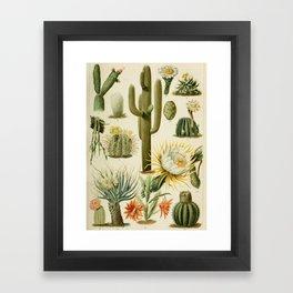 Naturalist Cacti Framed Art Print