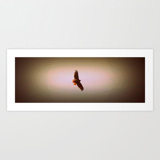 Hawk Eyes II Art Print