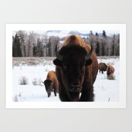 Little Bison Art Print
