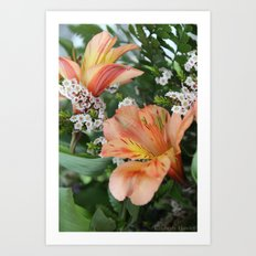 Freesia 3 Art Print