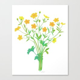 Spring Buttercups Wildflower Illustration Canvas Print