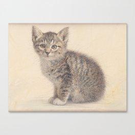Gray kitty  Canvas Print