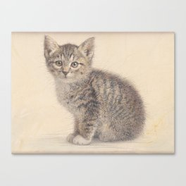 Gray kitty  Canvas Print