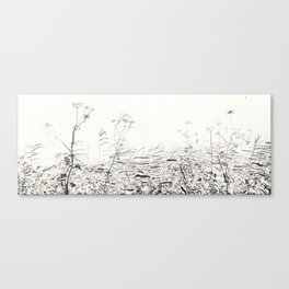 Cow-parsley in Osdorp Canvas Print