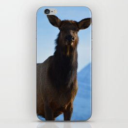 Elk in the Canadian Rocky Mountains iPhone Skin