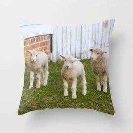 3 Little Lambs Throw Pillow