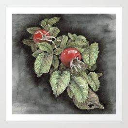 Rosehips Art Print