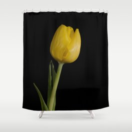 Floral Nature Photograph Yellow Tulip on Black Background 5 Shower Curtain