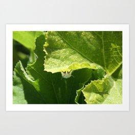 Peek-a-boo Moth Art Print