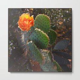 Cactus 1 in bloom Metal Print