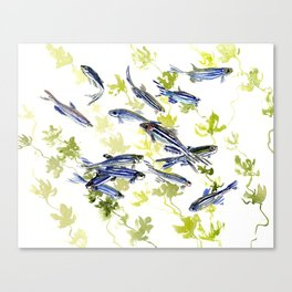 Fish Blue green fish design zebra fish, Danio aquarium Aquatic design underwater scene Canvas Print