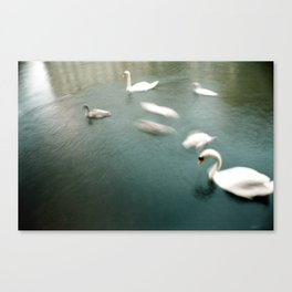 the swan river Canvas Print