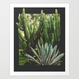 Cacti Growth Art Print