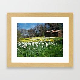 Daffodils and Barn Framed Art Print