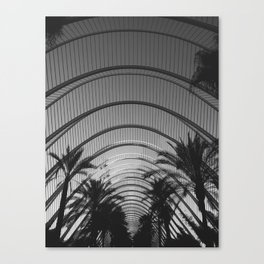 palm days Canvas Print