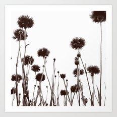 FLOWER 030 Art Print