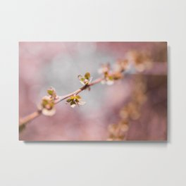 pink blossom 3 Metal Print