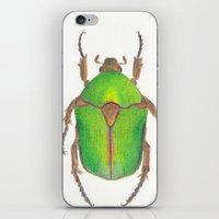 beetle iPhone & iPod Skins featuring Beetle by Jen Eva