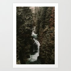 Forest Fall Art Print