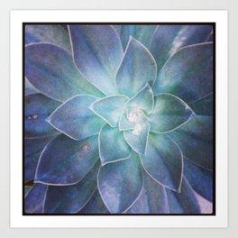 Dana Point Succulent 2 Art Print