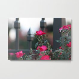 Cold Iron and Soft Pink Petals Metal Print
