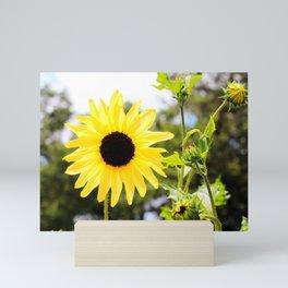 Sunflower With Buds Mini Art Print