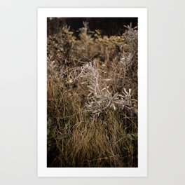 Fall Textures 2  Art Print