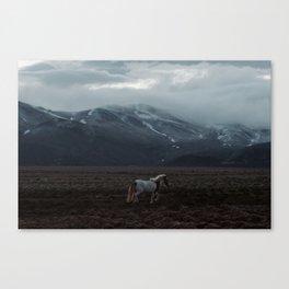 A horse. Iceland.  Canvas Print