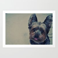 yorkie Art Prints featuring yorkie by michaelchon