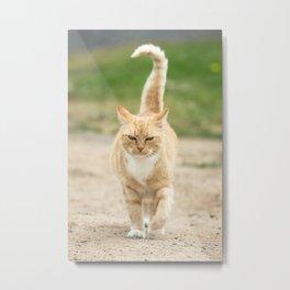 Ginger Cat Walking Metal Print