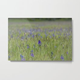 Blue Mountain Field Metal Print