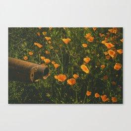 California Poppies 012 Canvas Print