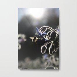 Honeybee & Borage Metal Print