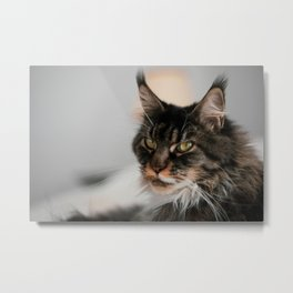 Cat by Thierry LEMARECHAL Metal Print