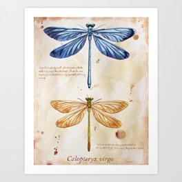 Science art insect art Art Print