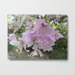 Spring - Cherry Flowers Metal Print