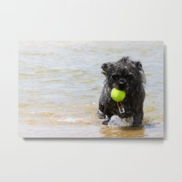 Dog Ball Water Metal Print