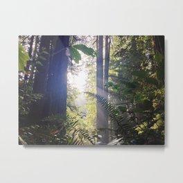 Prairie Creek Redwoods Metal Print