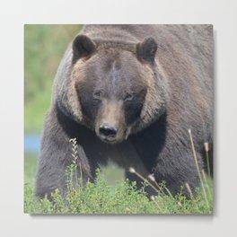 Brown Bear - Alaska Metal Print