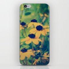 Summer Susans iPhone & iPod Skin