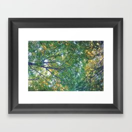 forest 013 Framed Art Print