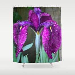 Sacred Trilogy: Water Irises Shower Curtain