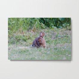 Bunny Rabbit2 Metal Print