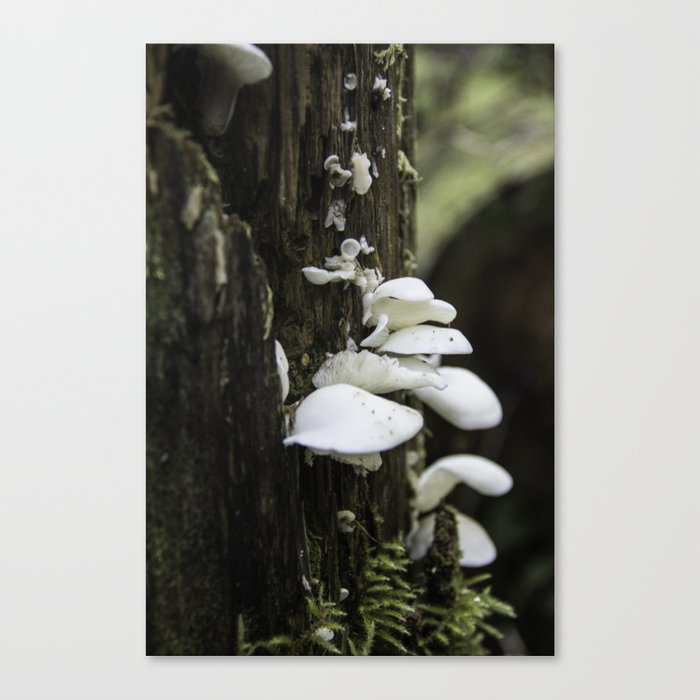 Forest Mushrooms Canvas Print
