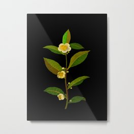 Mary Delany Botanical Vintage Floral Collage Thea Viridis Metal Print