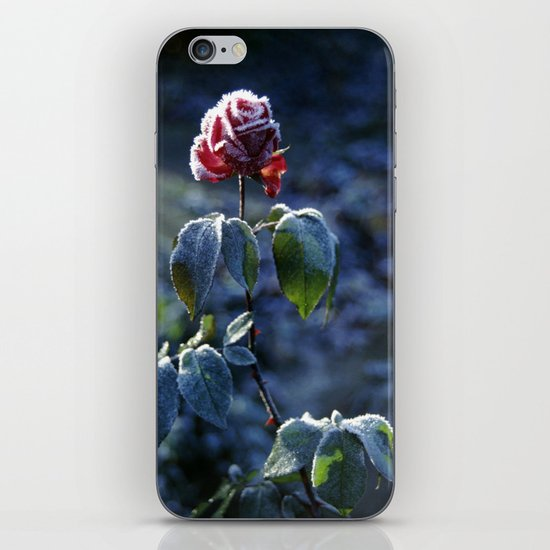 Frosted Rose iPhone & iPod Skin