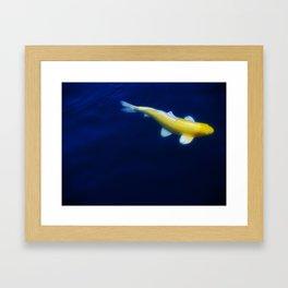 Lucky Gold Fish Framed Art Print