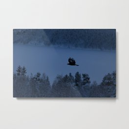 Golden eagle in the blue hour Metal Print