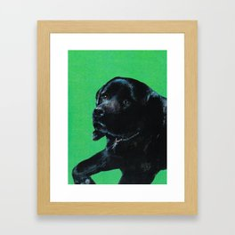 Black lab on green Framed Art Print